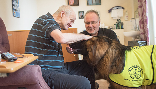 Cuerden Hall patient patting a Pets as Therapy dog