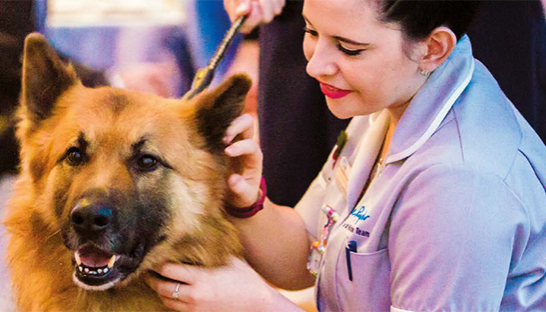 Leckhampton Court Hospice at Home Nurses Sarah Richards and Anna-Marie Seymour meet Eric the German shepherd, who supports his owner Andy Hill with his volunteering role at Manorlands Hospice, at our 2017 Incredible Colleagues Awards.