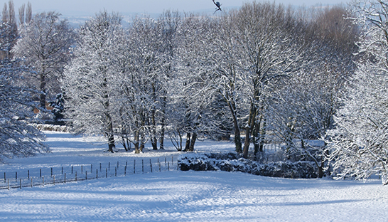Snow-covered trees in the grounds of Leckhampton Court Hospice