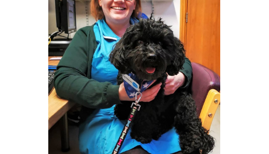 Bella the Pets as Therapy dog with a Sue Ryder Nurse
