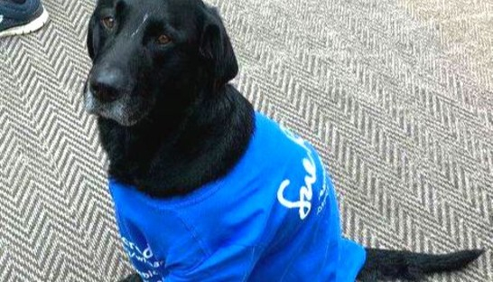 Harley the therapy dog in his Sue Ryder branded tee shirt