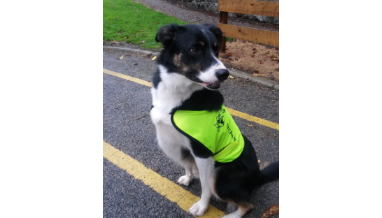 Mac the therapy dog in his work coat