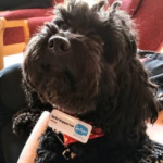 Bella the Pets as Therapy dog