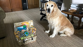 Finlay the therapy dog sitting next to his retirement basket full of doggy treats.